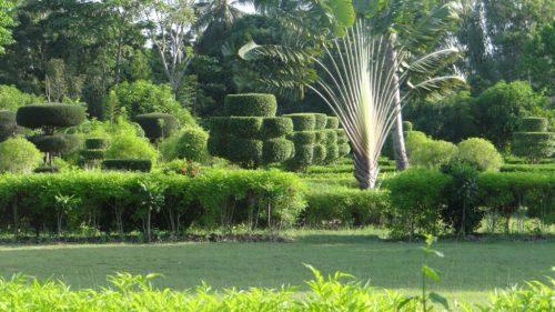 (c) Widlore Merancourt - Jardin botanique des Cayes (Haiti)